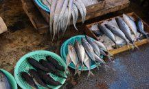 Pescado fresco en el mercado de Jagalchi