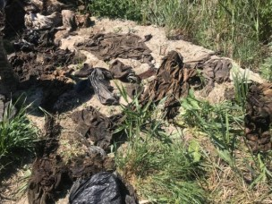 У поліції прокоментували виявлення речей загиблих під Іловайськом бійців