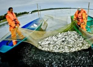 Росія захопила до 90% риболовецьких ресурсів України в Чорному морі