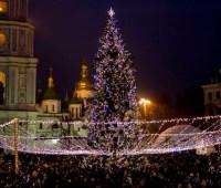 Эксперты дали советы как правильно выбрать новогоднюю елку