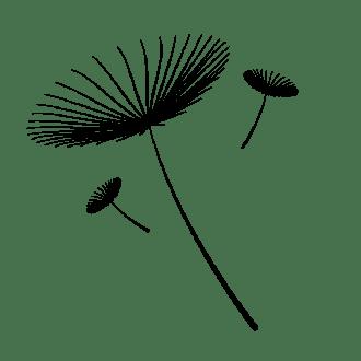 As sementes voadoras de dente de leão, nossa inspiração, nossa marca