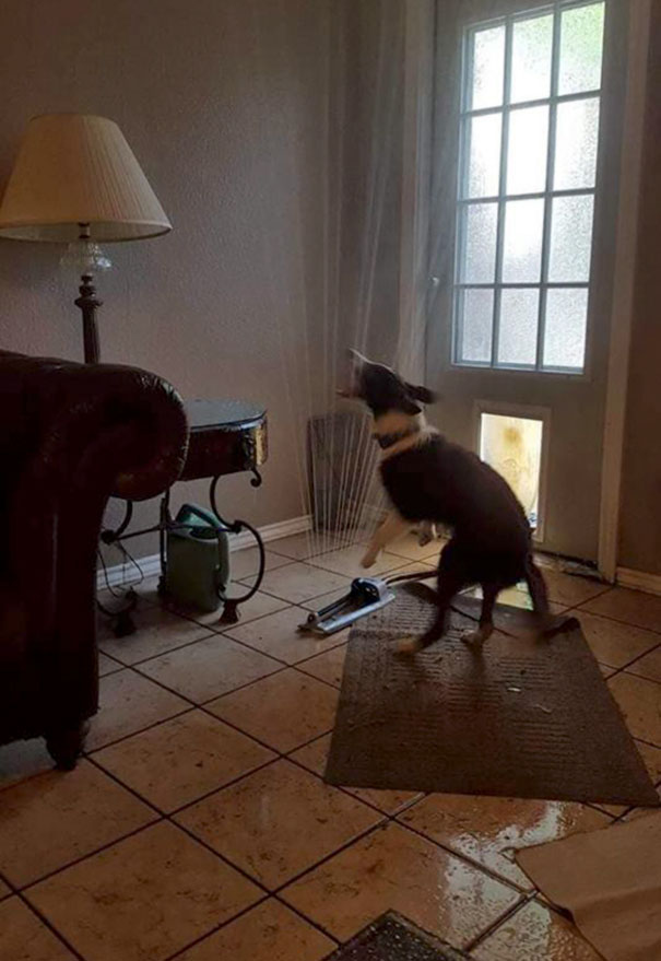 funny-idiot-dogs-166-5b51cb2468d4e__605