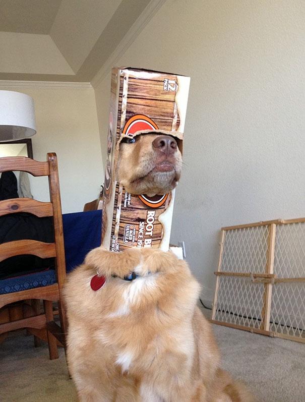 funny-idiot-dogs-96-5af2b7c25ccaf__605