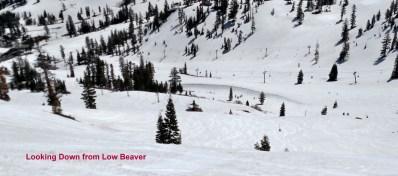 Low Beaver (Photo: Andy Wertheim)