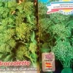 Cime di rapa o broccoletti