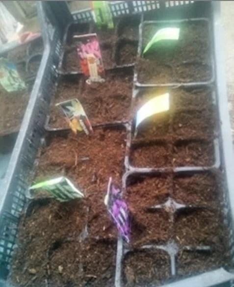 semina fiori