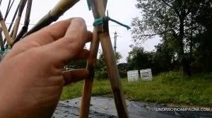 Impalco dei pomodori con le canne Legatura