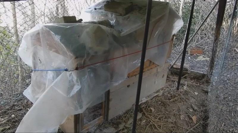 come proteggere il pollaio in inverno