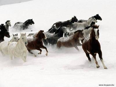 sem-autor-horses-in-the-snow
