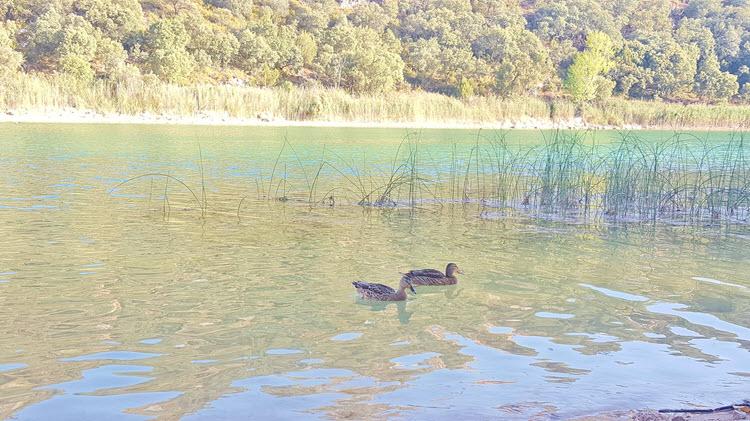 Lagunas de Ruidera_Patos