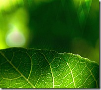 wallpaper_leaf