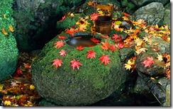 A tsukubai stone basin in an autumn garden in Kyoto, Japan