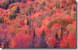 NaturePatterns01 - unpocogeek.com