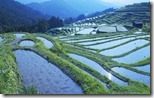段々畑 (Rice paddy, Mie prefecture, Japan)