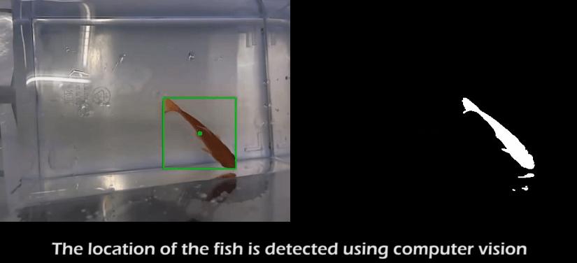 Un pez motorizado