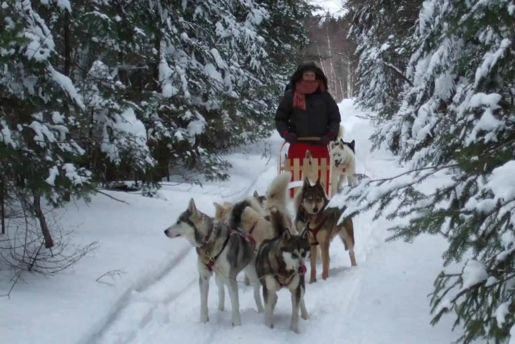 Chiens de traîneaux, québec, Canada, neige