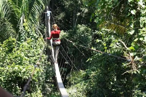 Acro-branche dans la jungle, Tambopata, Amazonie, Pérou