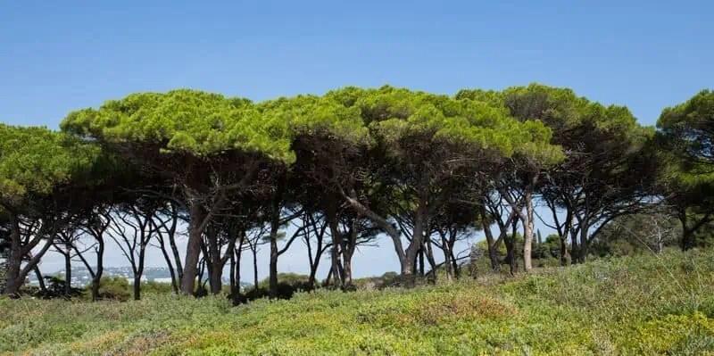 France, côte d'azur, Var, Sainte-Maxime, Saint-Tropez, Cannes, Port Grimaud