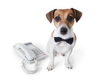 Tidy Dog Phone