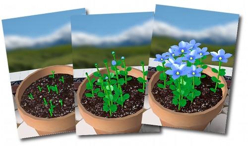 100510_flower_garden_01
