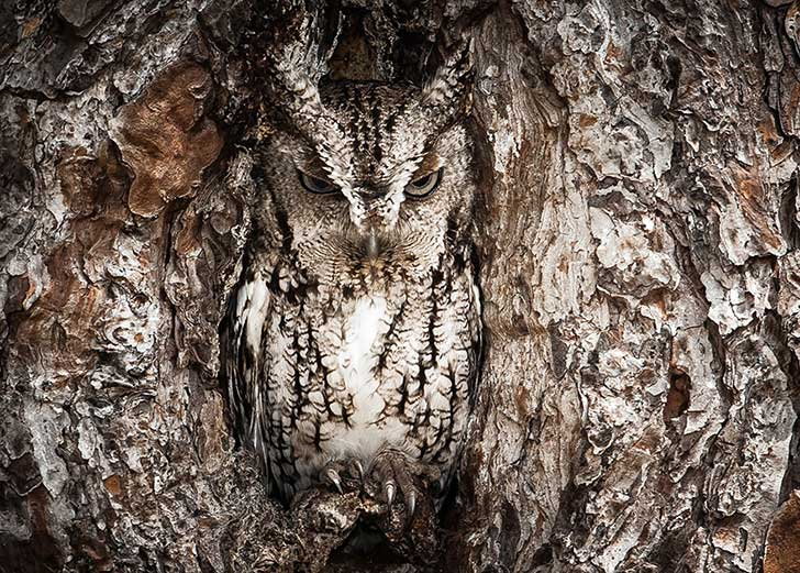 owl-camouflage-disguise-30
