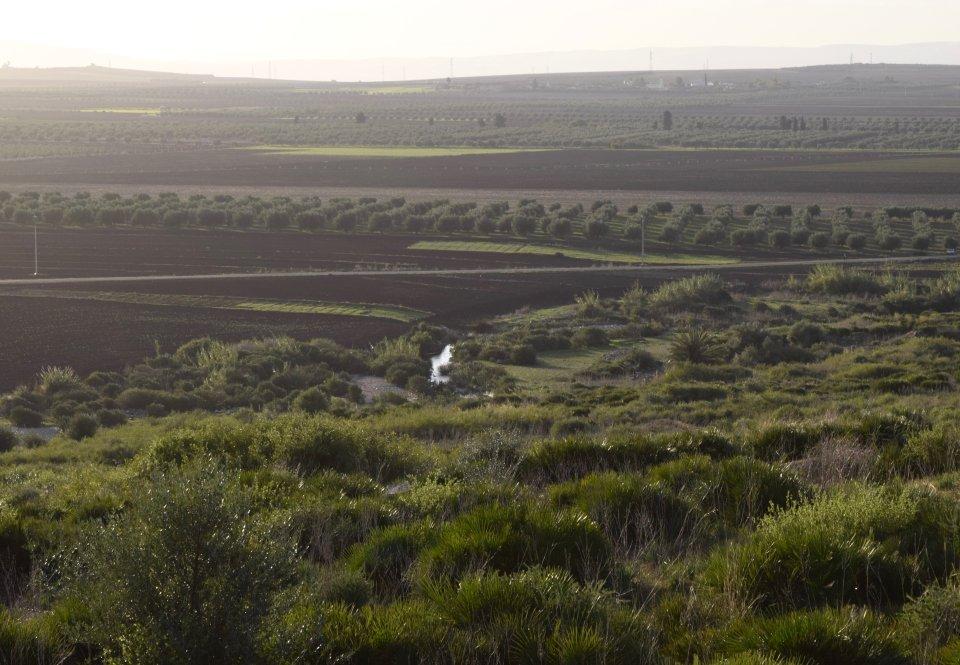 A rolling scrubland
