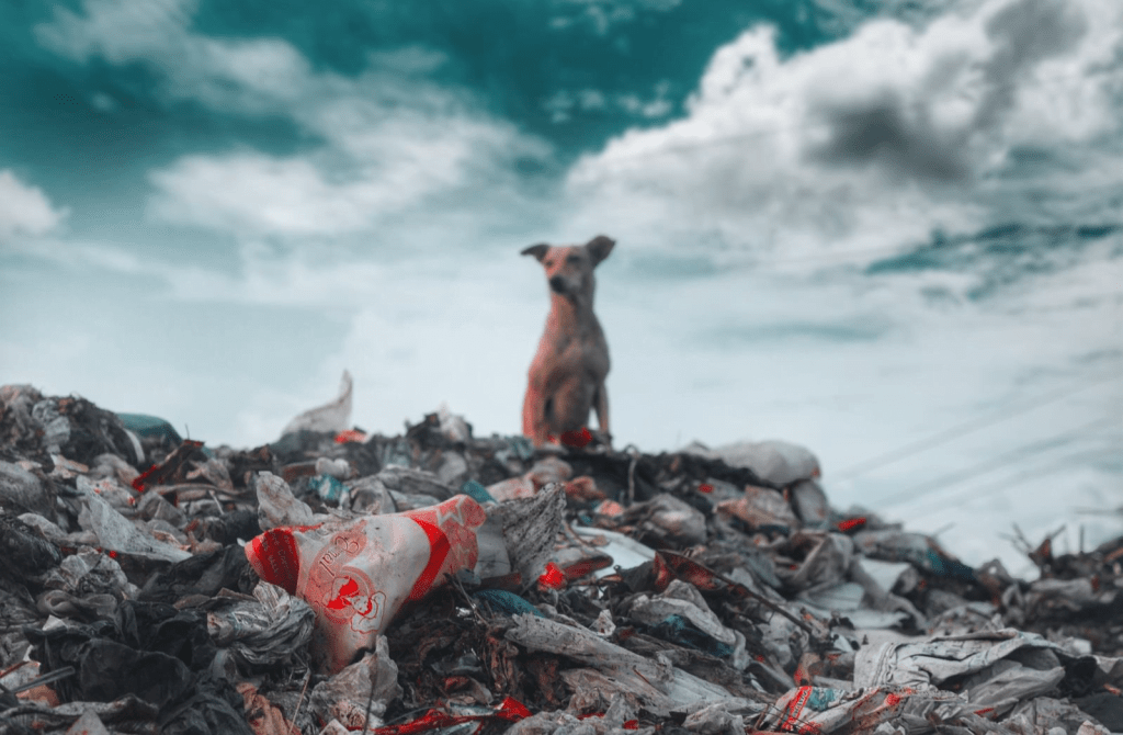 A sad dog sits atop a pile of garbage, judging out unsustainable habits