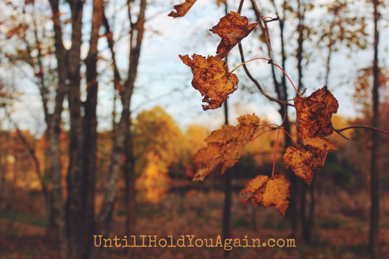 Thanksgiving, Gratitude in Child loss, Grieving through the holidays, Surviving the loss of a child,