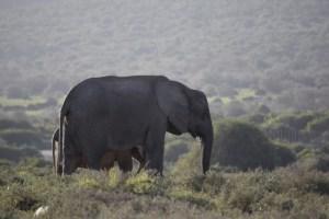 Afrique du Sud (423) (Large)