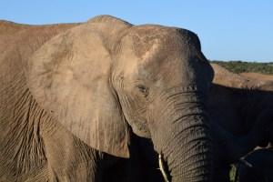 Afrique du Sud (449) (Large)