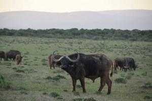 Afrique du Sud (487) (Large)