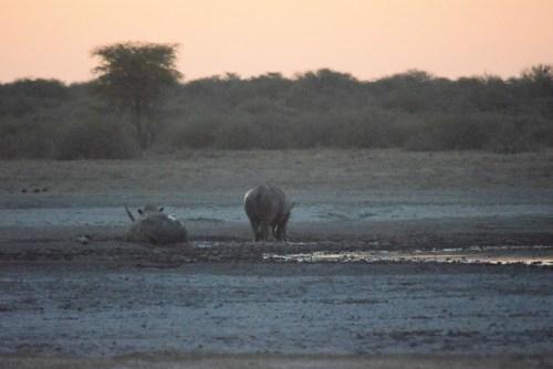 botswana-large-2039