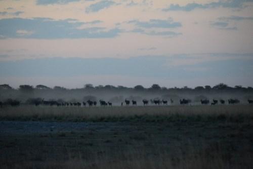 botswana-large-2046