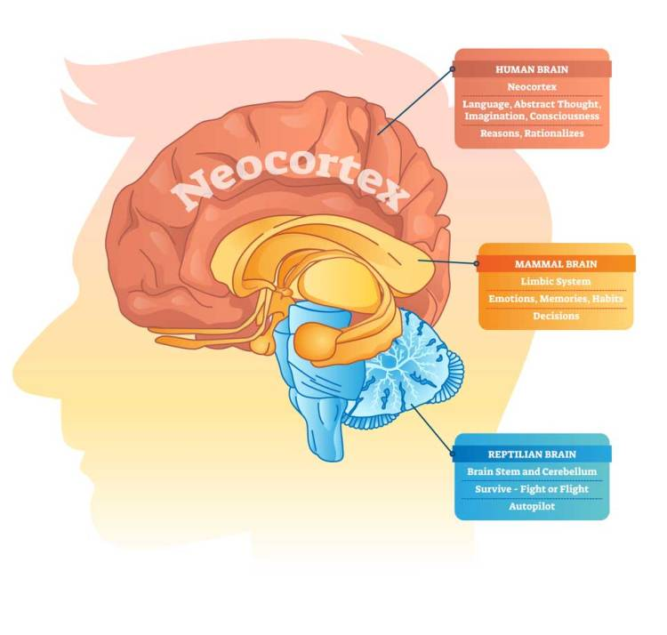 image showing the parts of the brain