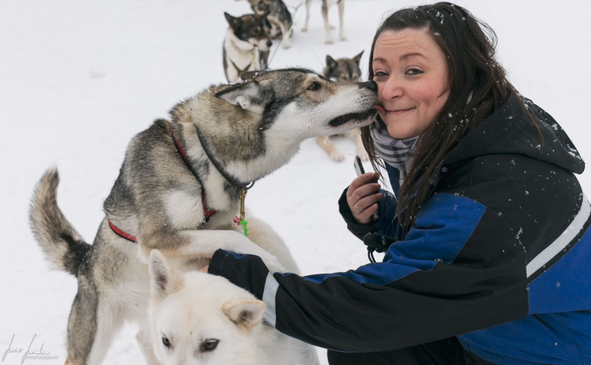 Yllas: Dog sledding con Safartica