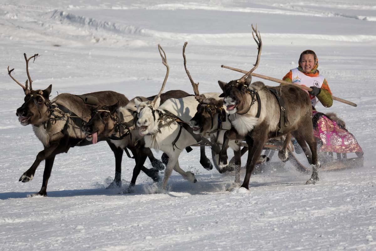 Nenets della Siberia: il Festival delle Renne