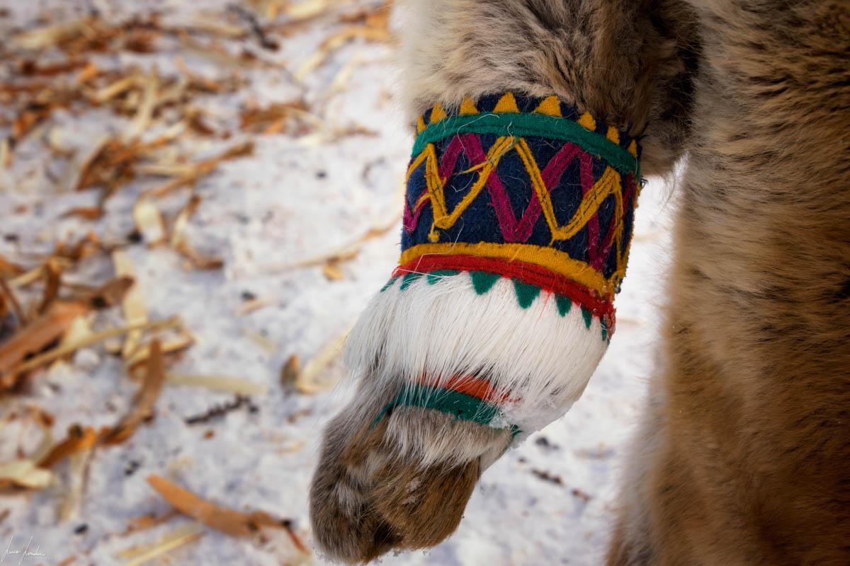 Nenets della Siberia: i guanti