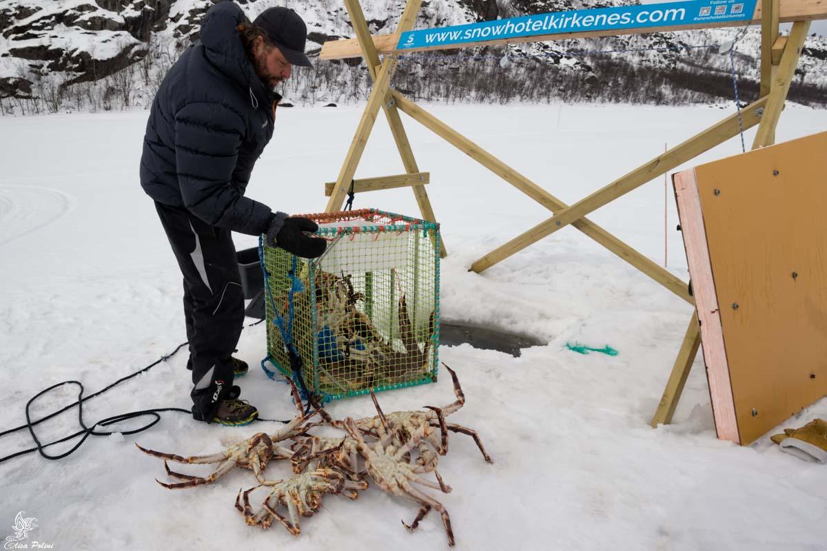 King Crab Safari a Kirkenes