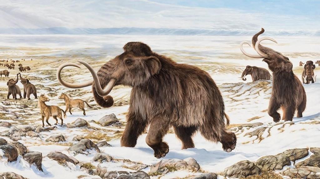 L'Isola di Wrangel è stata la casa degli ultimi mammut in Siberia