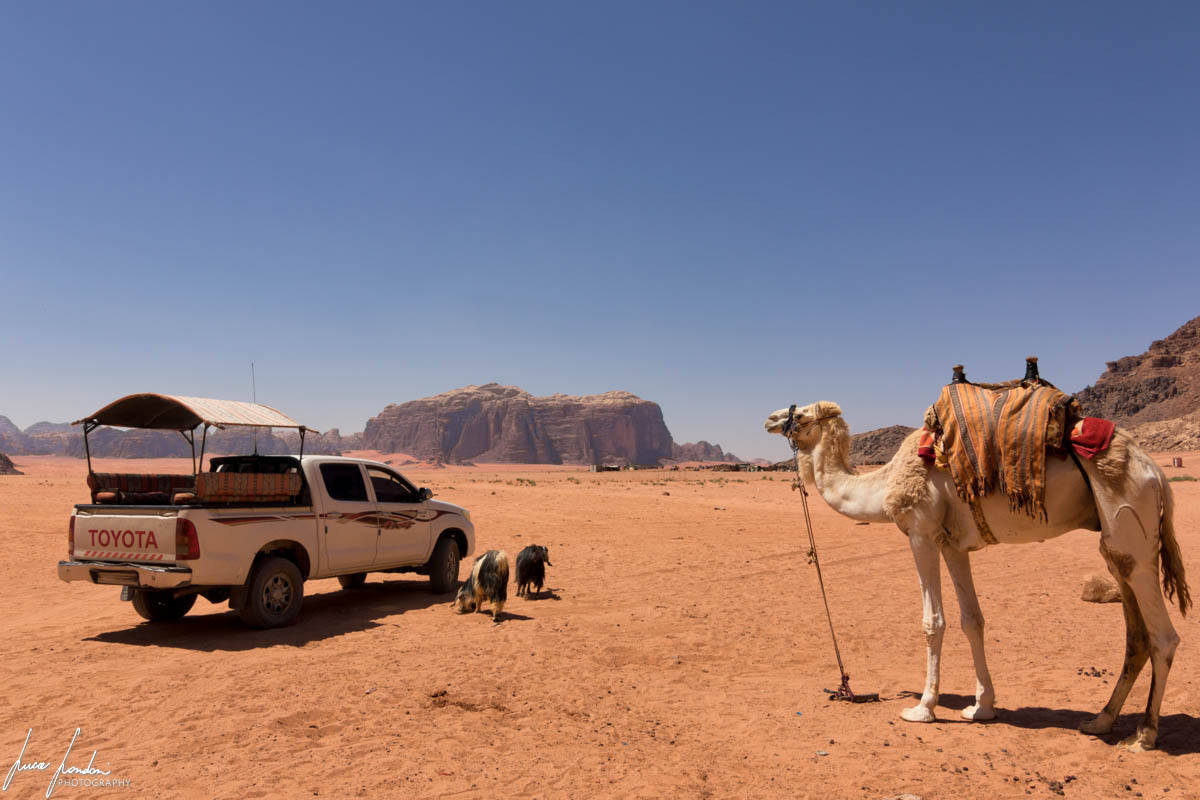 Wadi Rum: campo beduino vicino alle Lawrence Spring