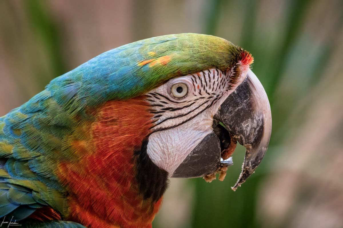 Cascate di Iguazu: Parque das Aves