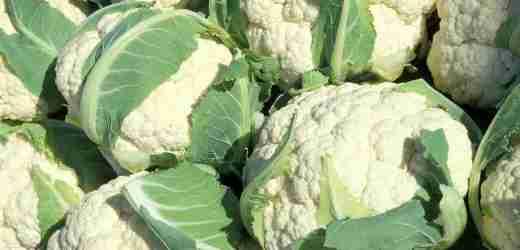 冬季到了吃什麼蔬菜最好 | 分享6大適宜冬季食用的蔬菜