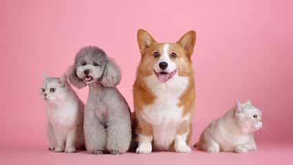 問:被狗狗舔舐不僅會感染皮膚和腸道疾病嗎?能否引起狂犬病