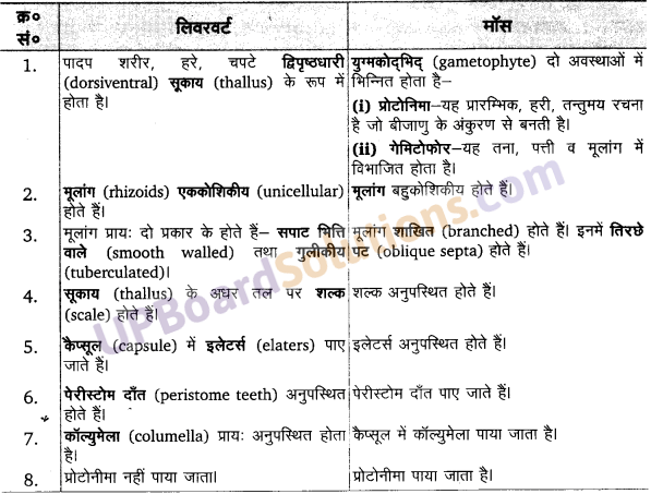 साइकस का वर्गीकरण UP Board Solutions For Class 11 Biology Chapter 3
