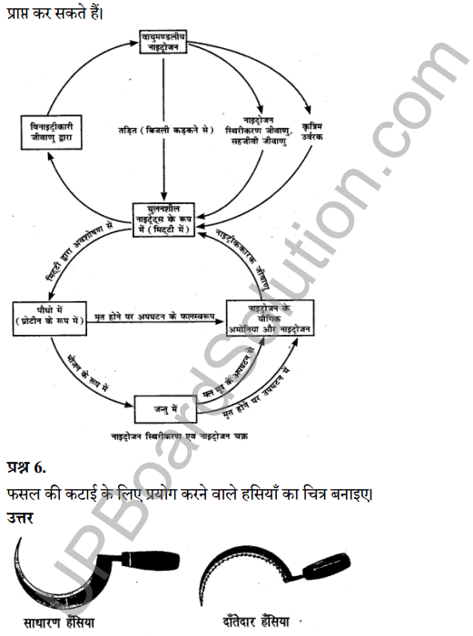 UP Board Class 8 Science Solutions Chapter 10 फसल उत्पादन 6