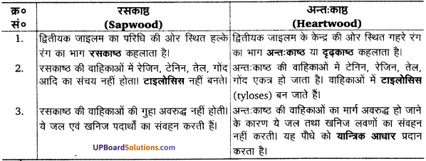 UP Board Solutions for Class 11 Biology Chapter 6 Anatomy of Flowering Plants image 6