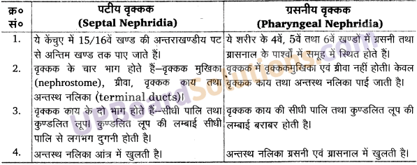 UP Board Solutions for Class 11 Biology Chapter 7 Structural Organisation in Animalsimage 4