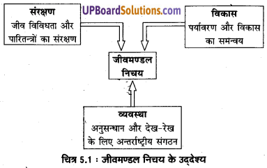 UP Board Solutions for Class 11 Geography Indian Physical Environment Chapter 5 Natural Vegetation(प्राकृतिक वनस्पति) img 2