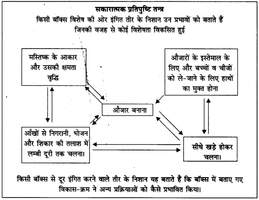 हादजा जनसमूह पर टिप्पणी UP Board Solutions For Class 11 History Chapter 1