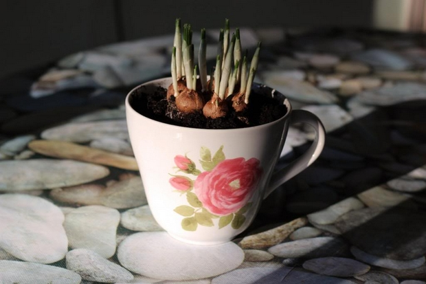 cambiar la finalidad de porcelana blanca taza de té plantador plantas mini jardín decoración de interiores-DIY-Ideas